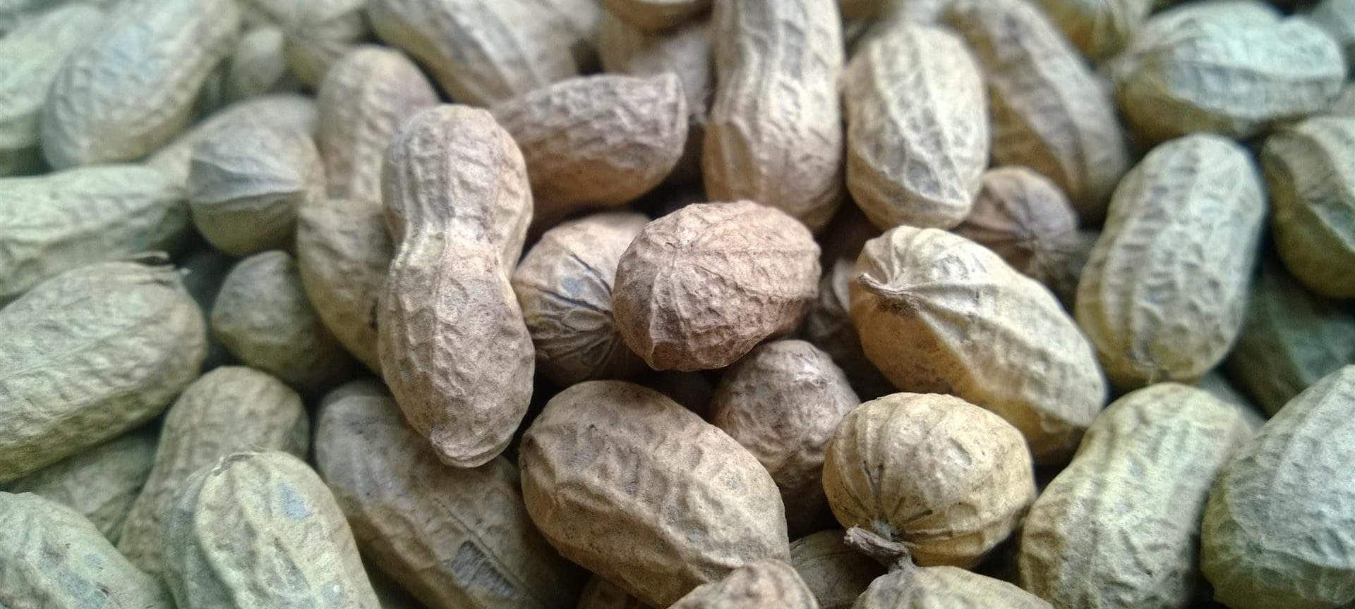 Organic PEANUT IN SHELL